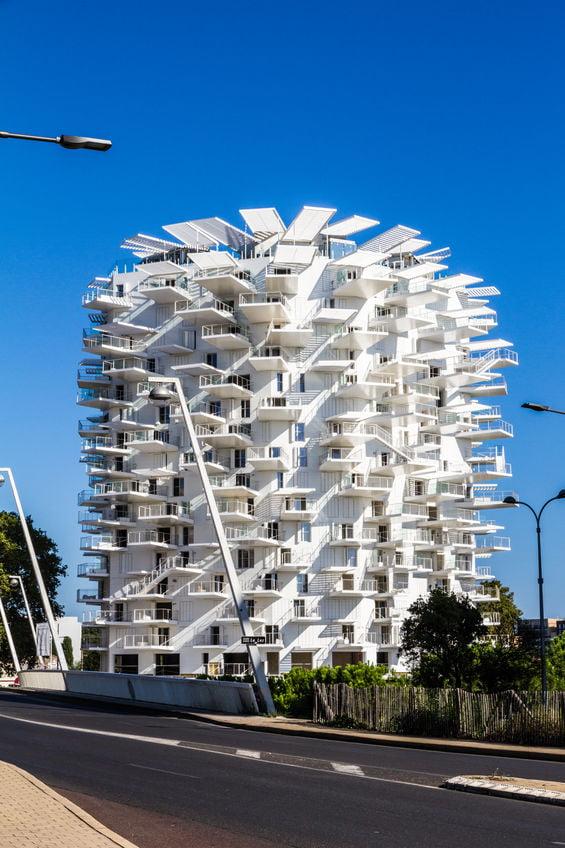 Arbre blanc de Montpellier