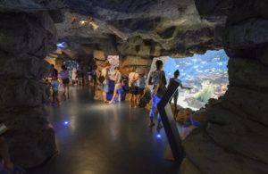 Planet Ocean ou Seaquarium : quel aquarium choisir à Montpellier