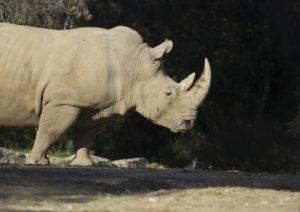 Visiter le zoo de Montpellier