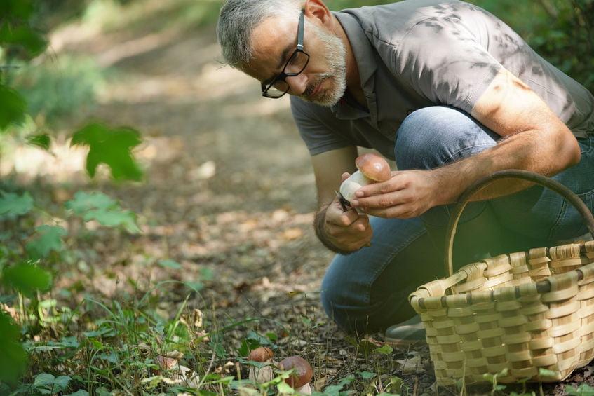 Ou ramasser des champignons à proximité de Montpellier
