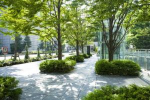 Des plantes et arbres vont être offerts aux Montpelliérains