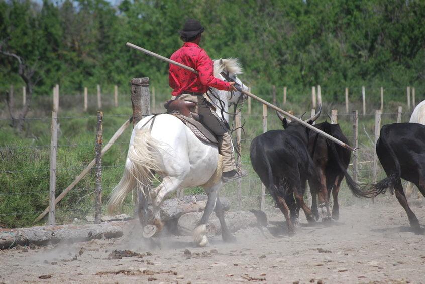 Manade en Camargue