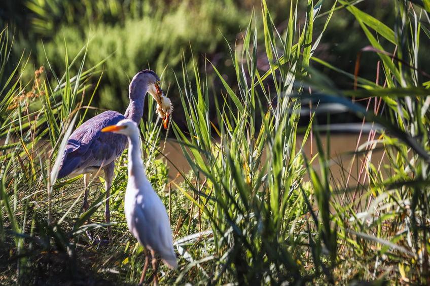 Oiseau en Camargue