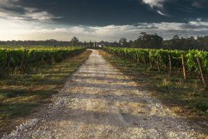 Read more about the article Une aide de 5 millions d'euros pour les agriculteurs héraultais
